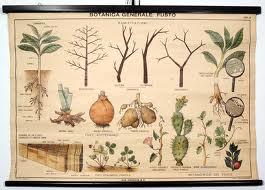 botanica2